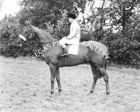 Racehorse Blue Butterfly with Jockey E Mercer